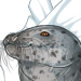 NorthernSeal